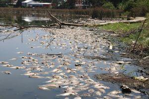 Quảng Ngãi: Cá chết trắng hồ thôn Vĩnh An