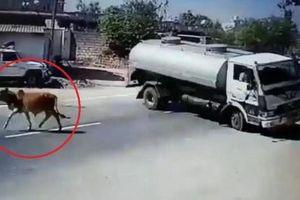 Khoảnh khắc xe bồn bẻ lái 180 độ tránh bò lững thững sang đường