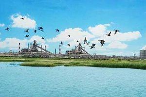 FHS Hà Tĩnh trồng 50.000 cây xanh che phủ 137 ha khuôn viên nhà máy