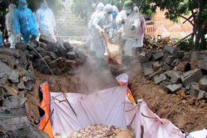 Phát hiện dịch tả lợn châu Phi đầu tiên tại Quảng Bình