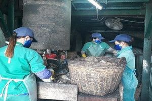 Sở Y tế tỉnh Cà Mau xác minh thông tin 300 xác thai nhi chôn cất trong khuôn viên nhà máy rác