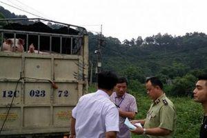 Lào Cai: Kiểm soát chặt chẽ, phòng chống dịch tả lợn châu Phi