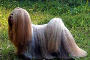 Top 10 loài động vật sở hữu bộ lông đẹp nhất thế giới