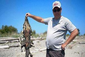 Bí ẩn quái vật đầu cá sấu, đuôi nhọn hoắt dạt vào bờ