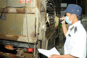 TP.HCM: Hỗ trợ cho các hộ chăn nuôi có heo phải tiêu hủy