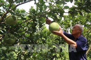 Xây dựng bộ giống nông nghiệp chủ lực ở Đồng bằng sông Cửu Long
