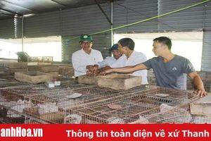 Huyện Thiệu Hóa hỗ trợ 5,3 tỷ đồng xây dựng các mô hình nông nghiệp ứng dụng tiến bộ khoa học - kỹ thuật