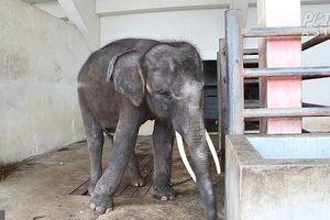 Xót xa động vật bị ngược đãi để mua vui cho du khách tại Thái Lan
