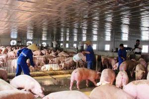 '5 không, 4 tại chỗ' trong phòng, chống dịch tả lợn châu Phi