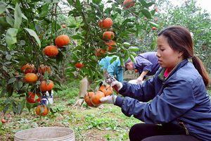 Mức cho vay tối đa với hộ gia đình trồng cây công nghiệp, cây ăn quả, nuôi trồng thủy hải sản