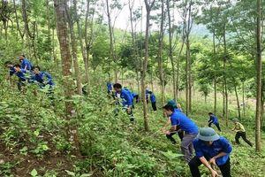 Thanh niên tham gia phòng, chống cháy rừng