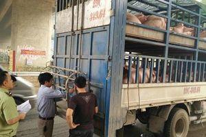 Lào Cai: Lực lượng QLTT thực hiện một loạt biện pháp phòng, chống dịch tả lợn Châu Phi