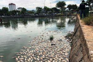Hàng tấn cá chết nổi trắng hồ, bốc mùi giữa trung tâm Đà Nẵng