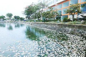 2 tấn cá chết, nổi trắng hồ Thạc Gián - Đà Nẵng