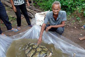 Cất vó trên sông, bất ngờ bắt được rùa biển lớn