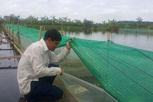 Thái Bình: 'Mắc màn' nuôi ếch nhung nhúc dưới ao, bỏ túi cả trăm triệu/năm