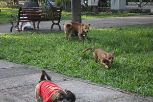 Ý thức và trách nhiệm của chủ nuôi chó