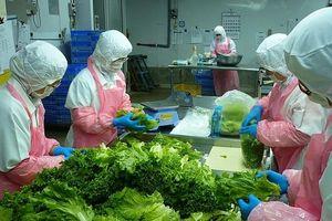 Xuất khẩu rau, quả: Yếu khâu chế biến