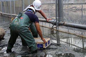 4 tấm vật liệu đá núi lửa kết hợp nano để làm sạch sông Tô Lịch