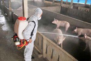 Bất chấp dịch tả lợn châu Phi, ngành nông nghiệp vẫn tăng trưởng 2,8%