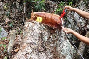 Bài học đắt giá do buông lỏng quản lý rừng ở Bắc Cạn