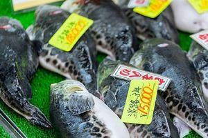 Ăn cá nóc tự bắt được, người đàn ông bị hư thận vĩnh viễn