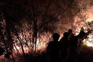 Khống chế thành công đám cháy rừng thông trên núi Quyết
