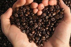 Giá cà phê hôm nay 17/6: Đi ngang đầu tuần mới