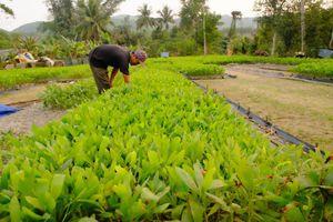 Quảng Nam: Người dân mòn mỏi chờ 'sổ đỏ' đất lâm nghiệp