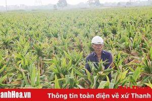 Hiệu quả của những cánh đồng sản xuất giống cây trồng ở huyện Yên Định