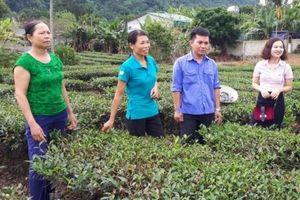 TDCS: Chiếc cầu thoát nghèo cho đồng bào dân tộc ở Con Cuông