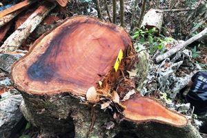 Bắc Cạn chấn chỉnh công tác bảo vệ rừng