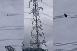 Nóng: Thanh niên ngáo đá trèo dây điện cao tít mít