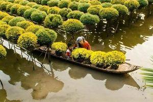 'Không cứng nhắc duy trì xuất khẩu gạo ĐBSCL với số lượng lớn'