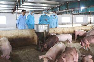 Cạn nguồn lực, huyện Ứng Hòa không thể thực hiện đúng quy định về phòng chống dịch tả lợn