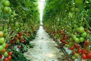 Ngành nông nghiệp vượt khó, duy trì đà tăng trưởng