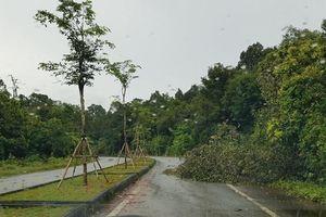 Phú Quốc: Lao vào cây ngã trên đường giữa khuya, nam phụ hồ tử vong tại chỗ