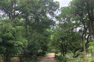 Thái Nguyên: Tăng cường các biện pháp quản lý Quỹ Bảo vệ và Phát triển rừng