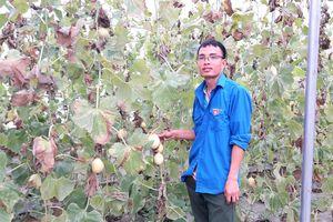 Chàng trai Mường đam mê trồng rau, quả sạch