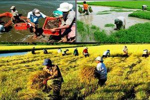Nông nghiệp thu gần 20 tỷ USD trong nửa năm