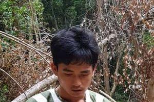 Khởi tố, bắt tạm giam 'lâm tặc' cưa hạ 14 cây gỗ trái phép