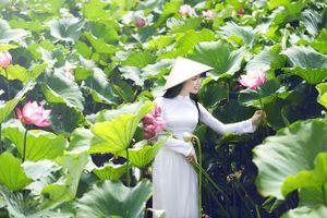 Chụp ảnh phản cảm với hoa sen: Hành động trái thuần phong mỹ tục