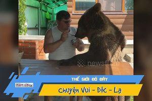 Lạ lùng gấu đen ngồi ăn sữa chua ngon lành