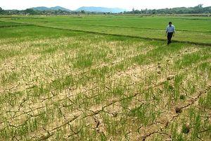 Mực nước nhiều hồ chứa ở Trung Bộ, Tây Nguyên giảm mạnh