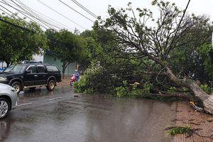 Mưa lớn kèm gió giật mạnh làm cây xanh gãy đổ đầy đường