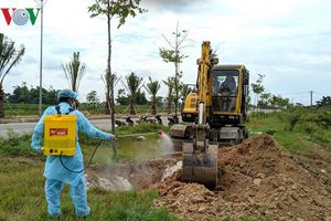 Thừa Thiên Huế tiêu hủy hơn 8.000 con lợn nhiễm dịch tả