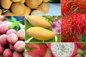Xuất khẩu nông sản sang Trung Quốc: Không còn là thị trường 'dễ tính'... nhưng vẫn hấp dẫn