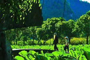 Mùa sen ở chùa Bích Động: Vẻ đẹp thần tiên