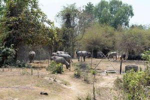 Dự án Công viên Sài Gòn Safari: Đền bù sai hơn 104 tỉ đồng