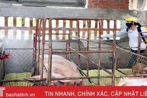 TX Hồng Lĩnh phun gần 400 lít hóa chất phòng dịch tả lợn châu Phi